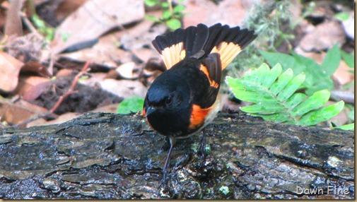birding high island_034