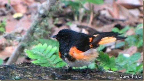 birding high island_037