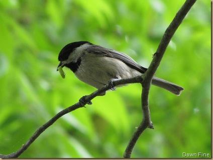 Birdies_20090430_009