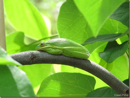 Dawns bloggy blog: American Tree Frog @ Garden supply store