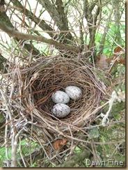 Cardinal nest dells_20090507_001