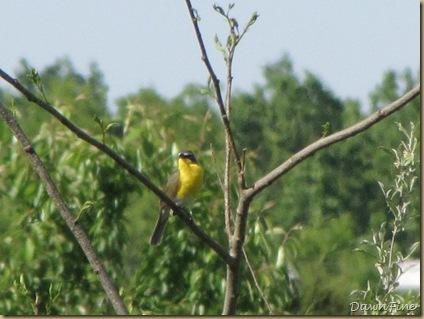 belliplain state forest_20090519_006