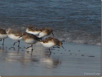 Nummy Island, NJ_20090520_096