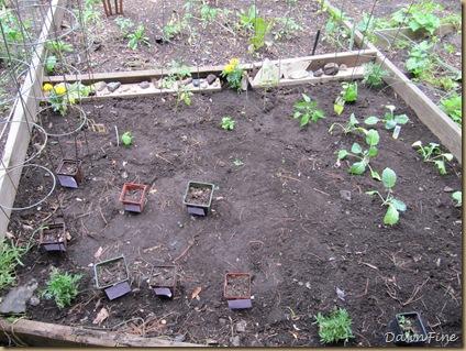 sams garden_20090528_010
