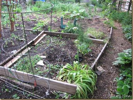 Sams garden _20090524_010
