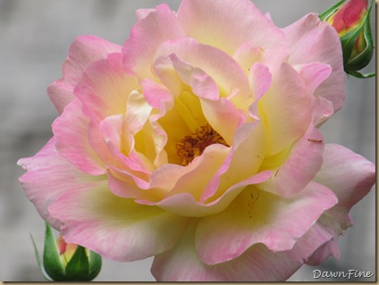 sams garden_20090528_017