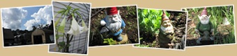 View dads gnomes