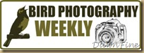 bird photog weekly