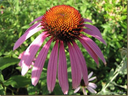 loris garden_20090718_008