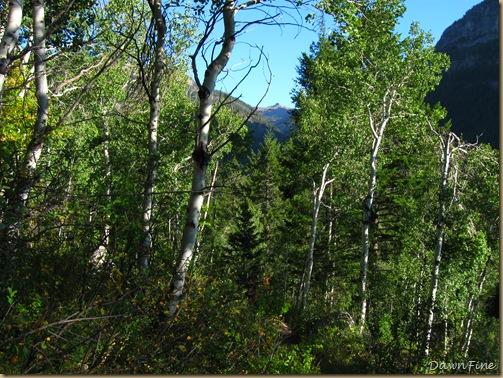 Table mountain Jeffs_20090908_054
