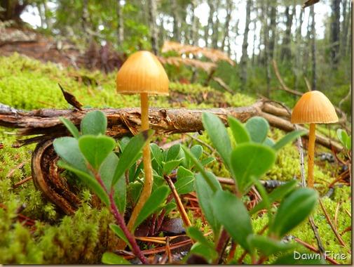Mushroom picking sutton_022