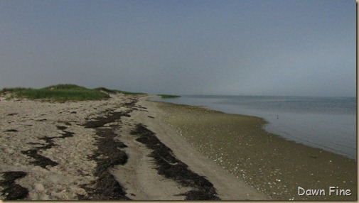 south beach birding_004