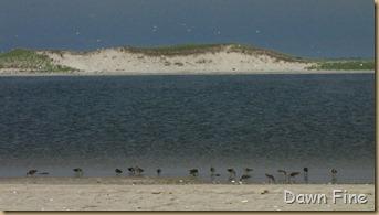 south beach birding_038