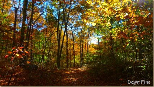 Autumn_040