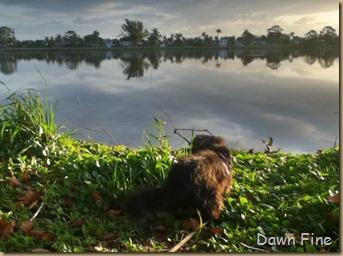 ballie pond