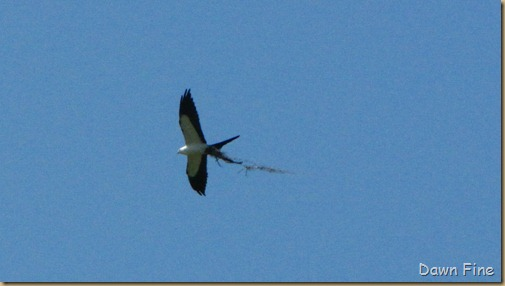 kite in campground_004