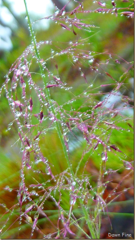 Water droplets and flowers_065