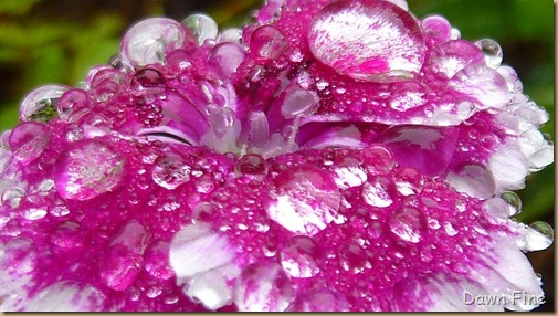 Water droplets and flowers_031