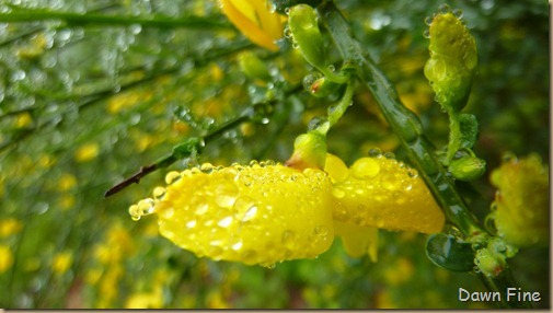 Water droplets and flowers_101