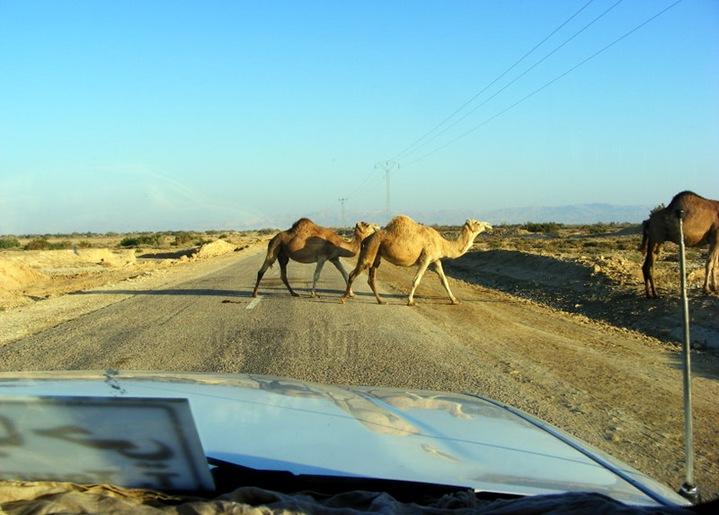 TUNISIA 2009 424