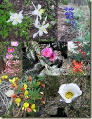 07 GRCA wildflowers collage (618x800)