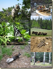 10 GRCA wildlife collage (618x800)