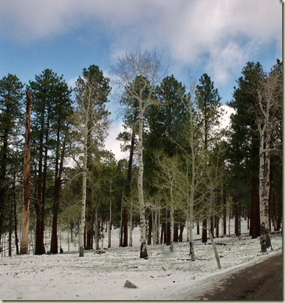 01 Snow in forest along road from home NR GRCA NP AZ (963x1024)