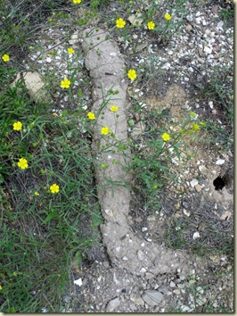 02 Unknown LYF & Pocket Gopher burrow Walhalla Plateau NR GRCA NP AZ (768x1024)