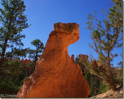 a1438 Hoodoo face along Navajo Loop trail Bryce Canyon NP UT (1024x814)