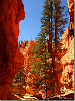 01 Looking down canyon on Navajo Loop trail Bryce Canyon NP UT (759x1024)