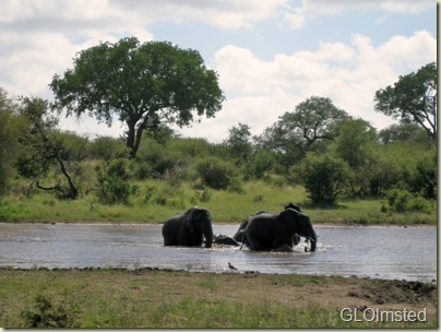 10 Elephants bathing Kruger NP Mpumalanga ZA (800x599)