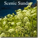 Scenic Sunday badge