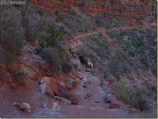04 Mule train passing 3-mile house Bright Angel trail GRCA NP AZ (1024x768)