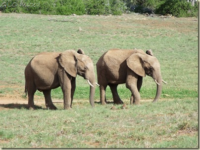 09 Elephants Addo Elephant NP Eastern Cape ZA (1024x768)