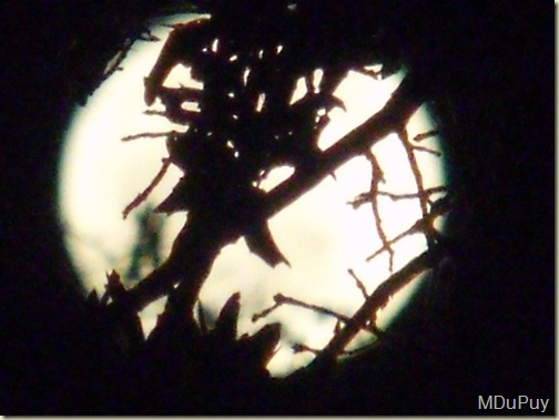 03 Full moon thru foliage Yarnell AZ by Mike (1024x768)