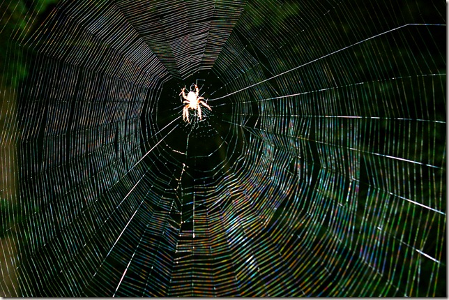 spider web with a spider in the center