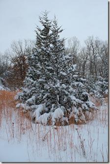 jan 11 snow 071