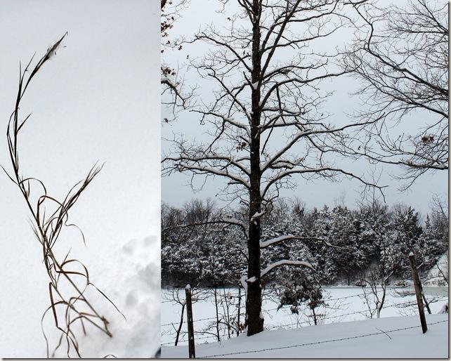 2011-01-20 jan 11 snow2