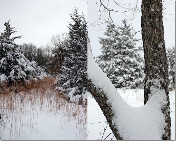 2011-01-20 jan 11 snow3