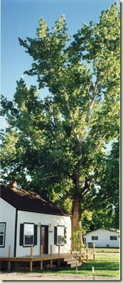 Our house 1906 with cottonwood tree 001