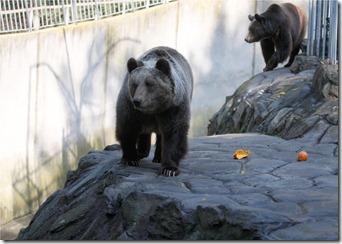 Bears (Zoo)