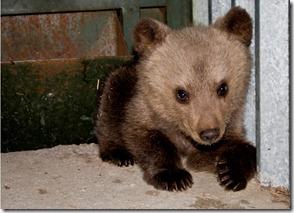 αρκουδάκι 1