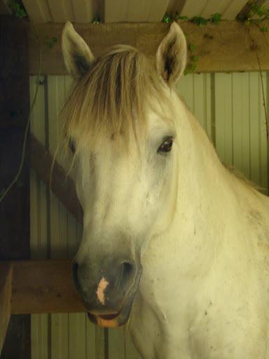 Vos plus belles grimaces de cheval et photos gag .... - Page 5 DSC08690
