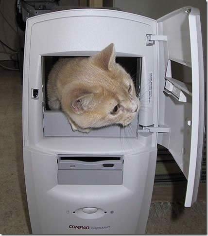 computer-cat-full