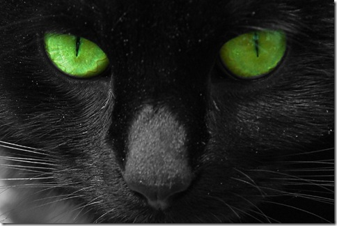cat-picture-green-eyes-Big-E-Mr-G-cat