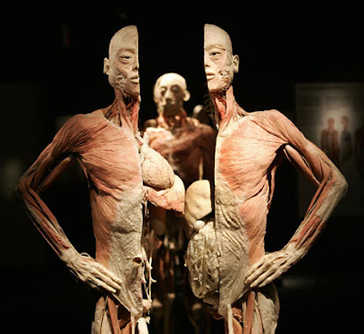 Image shows body without skin, halved vertically to show insides. Clearly visible are lungs and stomach protruding