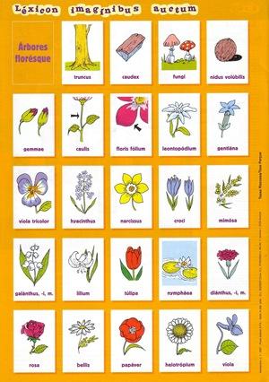 De arboribus floribusque
