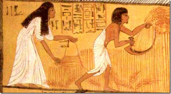 Camponeses ceifando trigo, detalhe de pinrura mural da tumba de Sennedjem, em Deir-El-Medina, Egito