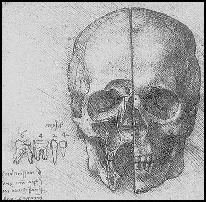 anatomia do crânio de Leonardo da Vinci 1510