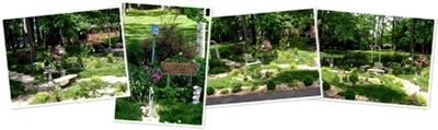 View the garden